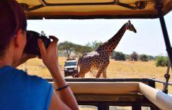 Safari Tanzania Offer01