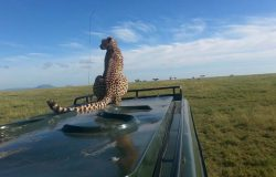scoperta-parchi-safari01
